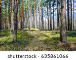 Spring Forest Landscape. Sprin...