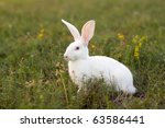 Stock photo white rabbit in a green grass 63586441