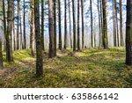 spring forest landscape. spring ... | Shutterstock . vector #635866142
