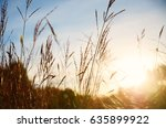 grass on sunset background | Shutterstock . vector #635899922