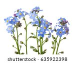 forget me nots isolated on... | Shutterstock . vector #635922398