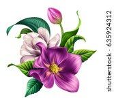 botanical illustration ... | Shutterstock . vector #635924312