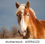 Beautiful Belgian Draft Horse...