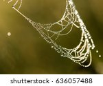 dew drops on a spider web in... | Shutterstock . vector #636057488