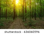 Forest With Sunlight. The Sun...