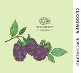 background with blackberry  a...