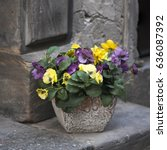 Small photo of Artificial violets in a pot, as an adornment of the entrance to a cafe, stand on paving stones