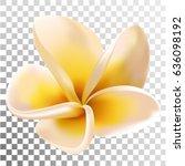 plumeria or frangipani flower...   Shutterstock .eps vector #636098192
