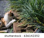 Three Colored Cat Leg On A...