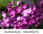 Lilac Colorful Background....