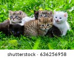 Stock photo group of little kittens in the grass 636256958