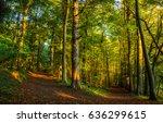 forest trees wallpaper. forrest ...   Shutterstock . vector #636299615