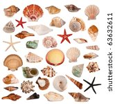 Shells Collection