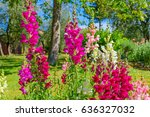 close up of colorful flowers of ... | Shutterstock . vector #636327032