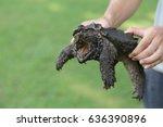 hand holding an alligator...   Shutterstock . vector #636390896