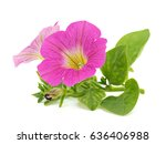 pink petunia flower on a white... | Shutterstock . vector #636406988