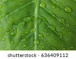 Water Droplets On Green Leaf.