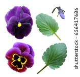Set Of Flowers And Leaves Of...