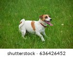 happy dog jack russell terrier... | Shutterstock . vector #636426452