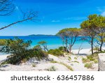 Sand Dunes And Pine Trees In...