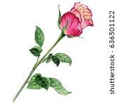 beautiful pink rose. watercolor ...   Shutterstock . vector #636501122