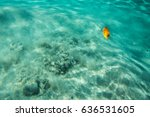 transparent turquoise sea water ... | Shutterstock . vector #636531605