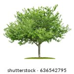 an isolated cherry tree on a... | Shutterstock . vector #636542795