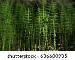 Wild Plants   Green Background...