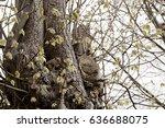 Grey Squirrel Sitting In Hollow ...