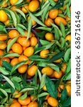 Small photo of Malayan kumquat fortunella foliage and fruit background.