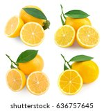 lemon fruits collection with... | Shutterstock . vector #636757645