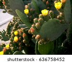 Prickly Pears In Row  Flowers ...