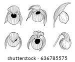 cypripedium orchids set by hand ... | Shutterstock .eps vector #636785575