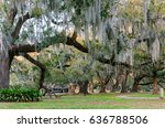 Centuries Old Live Oak This Is...
