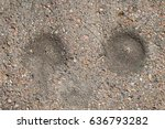 Small photo of Ant hills in gravel