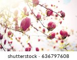 branches with beautiful... | Shutterstock . vector #636797608