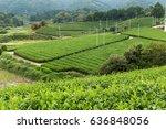 fresh green tea field | Shutterstock . vector #636848056