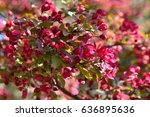springtime. beautiful blossom... | Shutterstock . vector #636895636