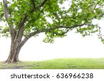big tree isolated on white... | Shutterstock . vector #636966238