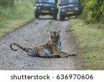 Tiger on road