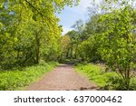 A wide sunlit footpath passes between oak and silver birch trees in Sherwood Forest