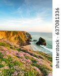 sea thrift in bloom on the...