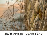 stone wall full of weaves | Shutterstock . vector #637085176