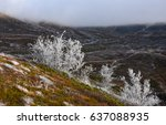 frosty autumn in the mountains | Shutterstock . vector #637088935