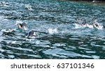 Penguins Swimming In Waters...