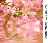 fresh pink flowers of sakura... | Shutterstock . vector #637103392