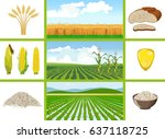agricultural fields   wheat ... | Shutterstock .eps vector #637118725