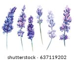 set of lavender flowers on... | Shutterstock . vector #637119202