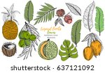vector tropical set with... | Shutterstock .eps vector #637121092