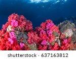 Beautiful Soft Coral And Seafa...
